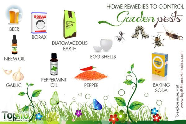 home remedies to control garden pests