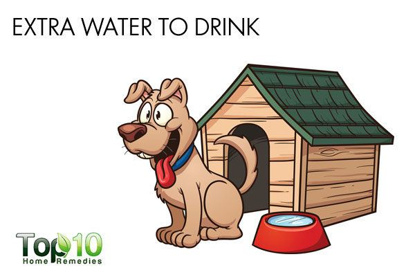 give extra water to your dog