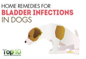 Home Remedies for Bladder Infections in Dogs