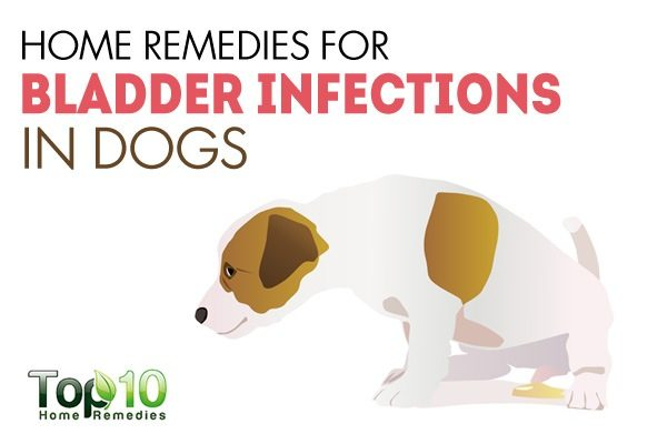 How Would Yu Treat A Uti In Dogs