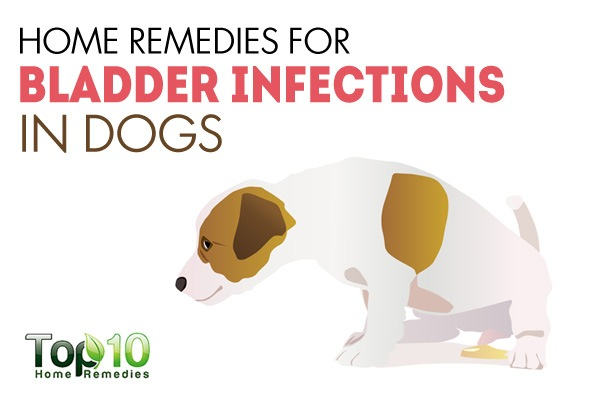 Natural Remedies For A Bladder Infection In Dogs