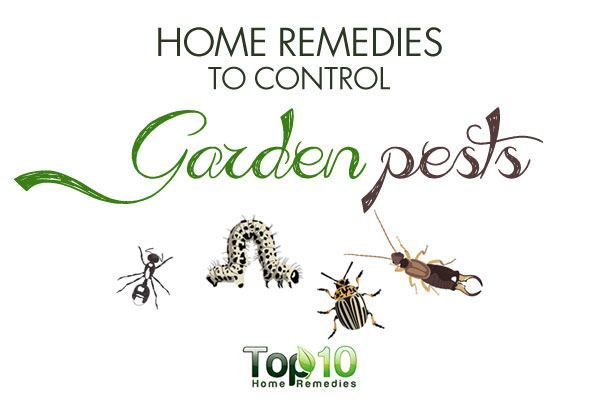 Home Remedies To Control Garden Pests Top 10 Home Remedies