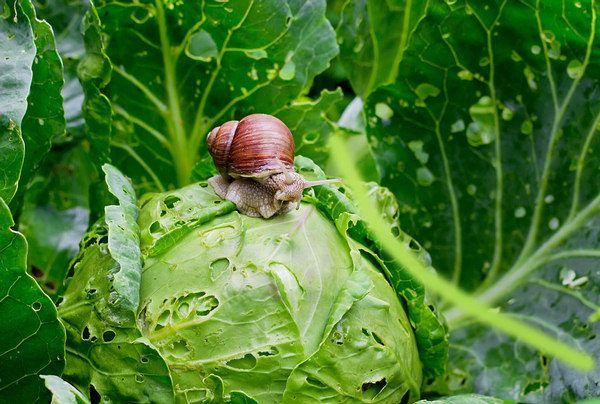 garden pests damage the produce