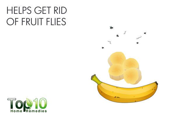 how to get rid of fruit flies in house top healthy fruits and vegetables