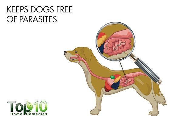 diatomaceous earth keeps dogs free of parasites