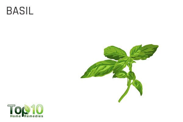 basil for enlarged adenoids