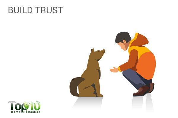 build trust with your dog