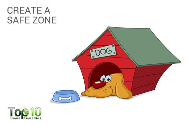 create a safe zone for your pet