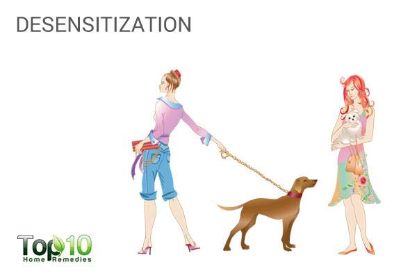 desensitize your dog from stressors