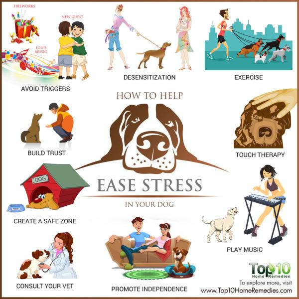 how to ease stress in dogs