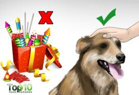 How to Help Your Dog Overcome Stress