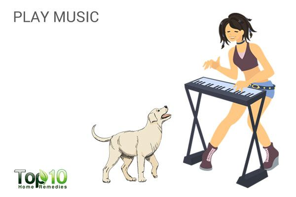 play music to manage stress in dogs