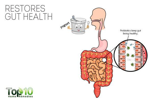 probiotics restore gut health