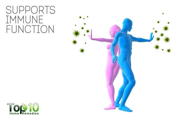 probiotics support immune function