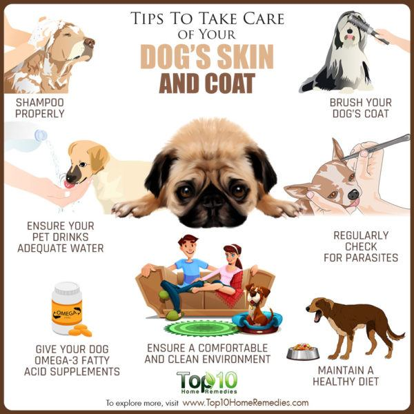 tips to care care of your dog's skin and coat