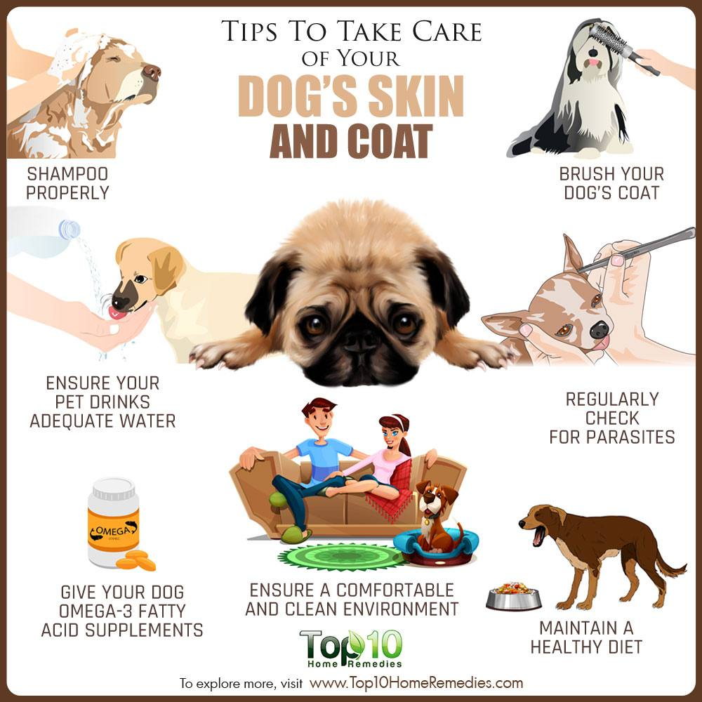Tips to Take Care of Your Dog's Skin and Coat | Top 10 Home Remedies