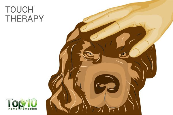 touch therapy to treat dog stress