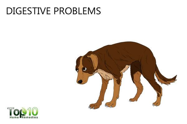 digestive problems in dogs due to stress