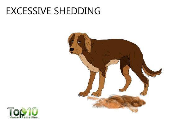 stressed dog excessive shedding