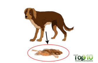 Top 10 Signs Your Dog May Be Stressed