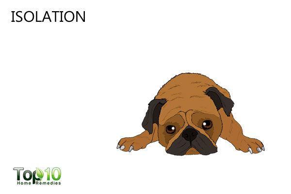 stressed dog isolated