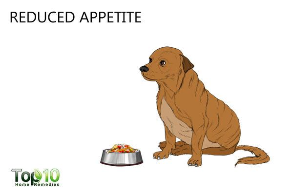 reduced appetite dog in stress