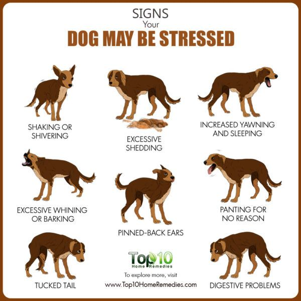 signs and symptoms of stress in dogs