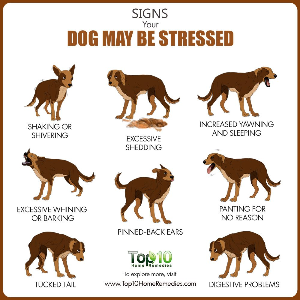 10 Signs Your Dog Might be Stressed & What You Can Do ...