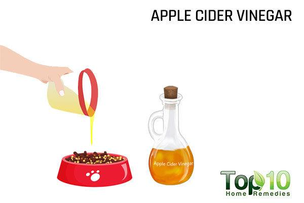 give apple cider vinegar to your dog