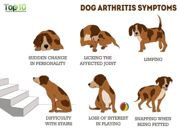 symptoms of dog arthritis