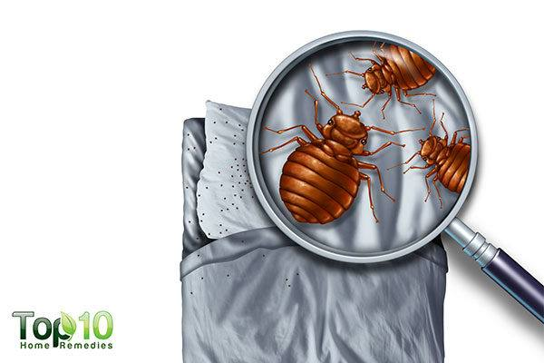 examine your bed carefully to find bed bugs