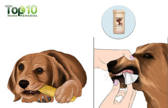 Useful Tips for Taking Care of Your Dog's Teeth
