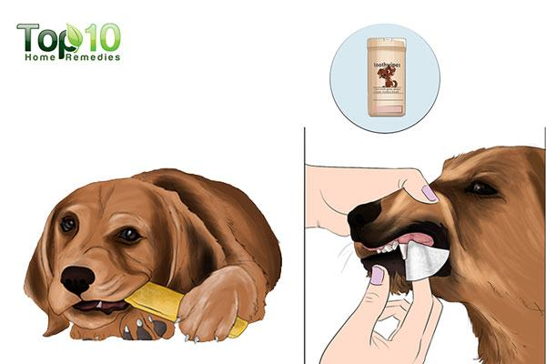 Home Remedies For Bad Teeth In Dogs