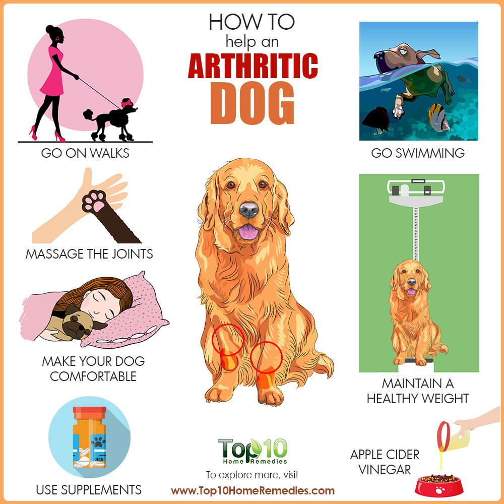What Can Help With Arthrites In Dogs