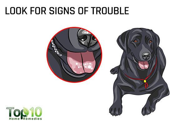 look for signs or dental problems in your dog