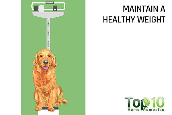 maintain healthy dog weight
