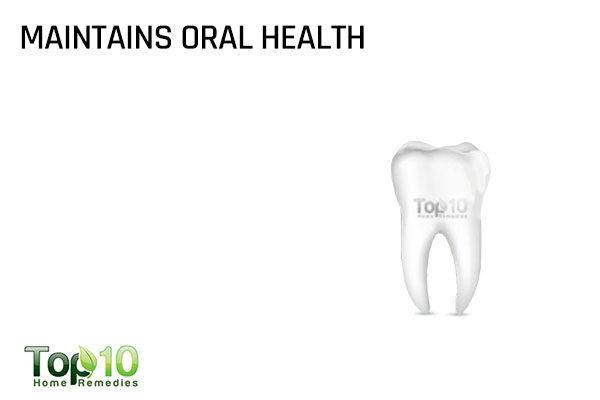 greek yogurt maintains oral health