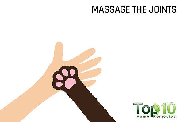 massage your dog's joints