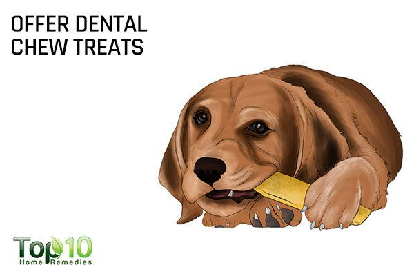 give dental chew treats to dogs