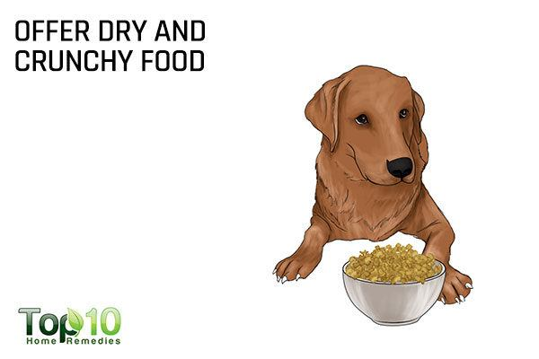 offer dry and crunchy food to your dog