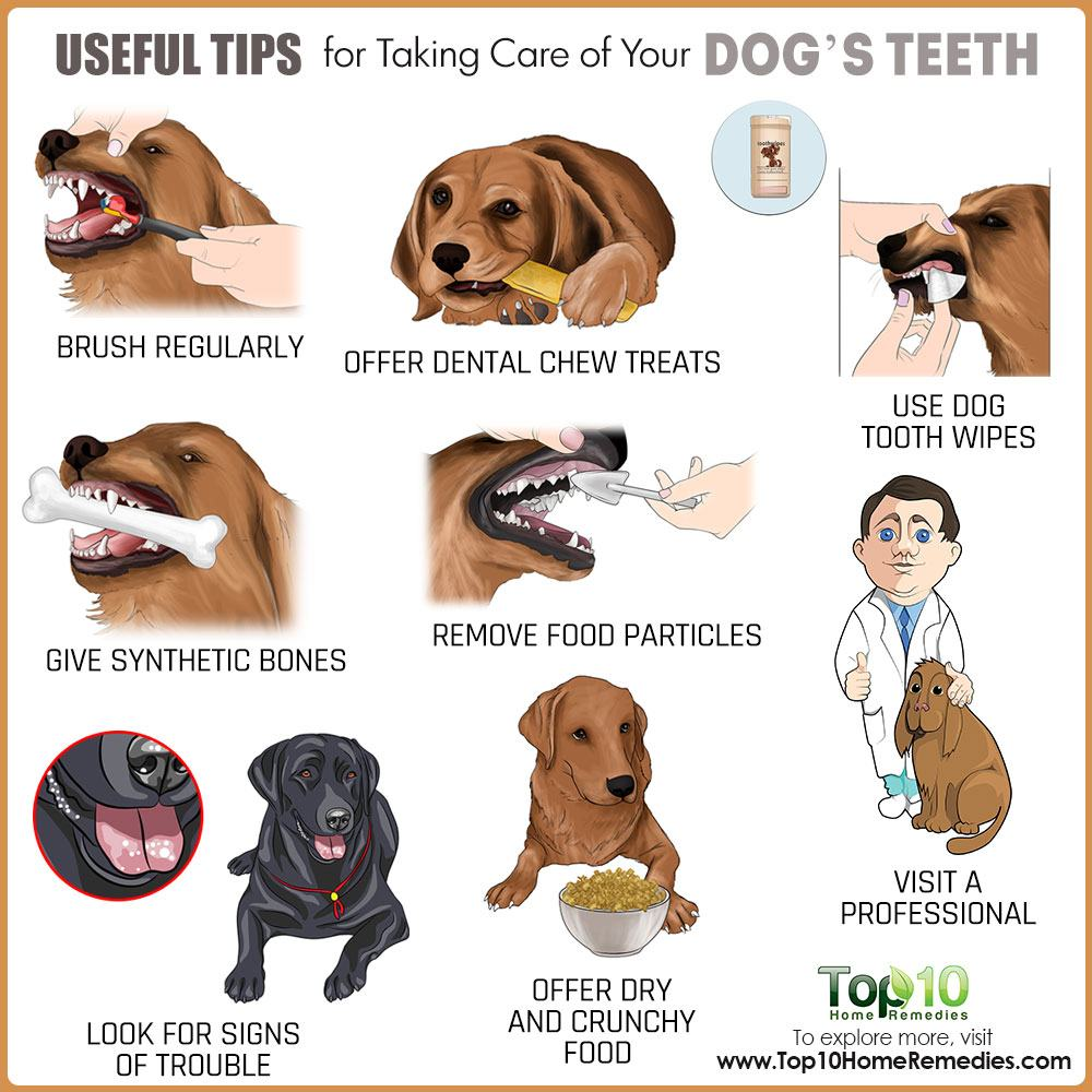 Useful Tips For Taking Care Of Your Dog S Teeth Top 10