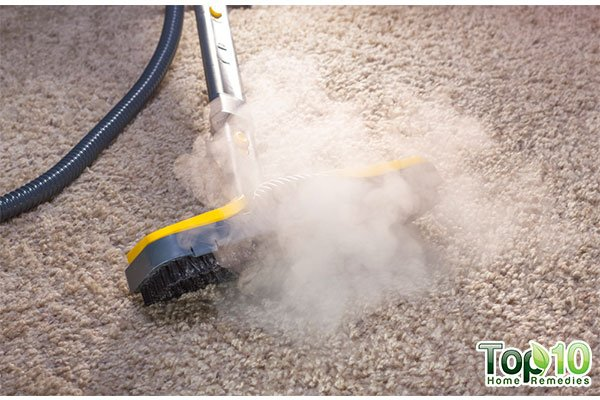How To Prevent And Control A Bed Bug Infestation Top 10