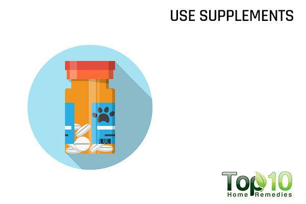 give supplements to your dog