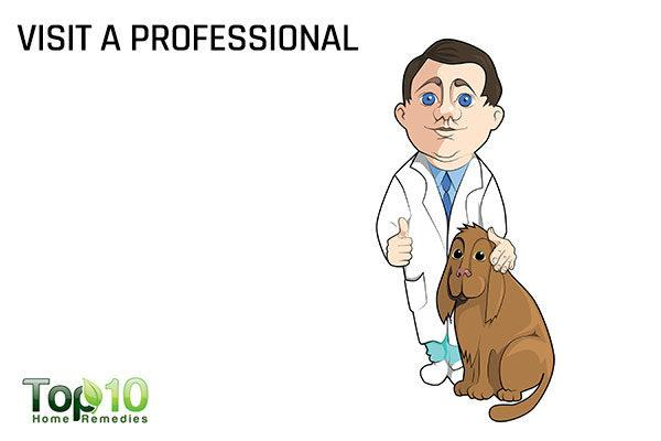 visit professional for dog dental care