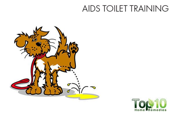 daily dog walks aid in toilet training