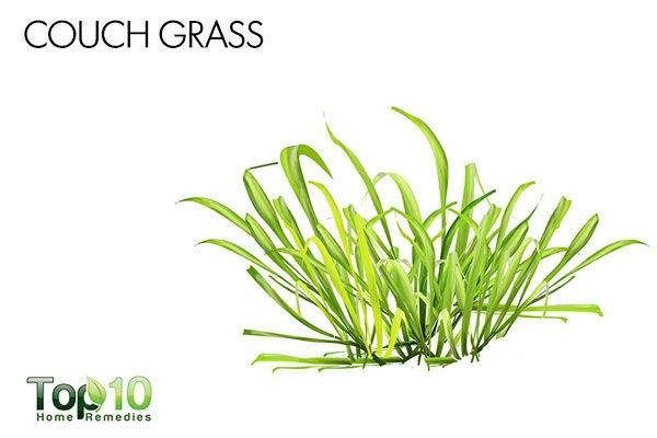 couch grass for cystitis in cats
