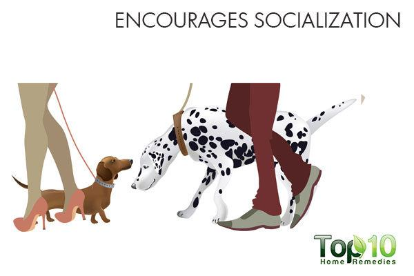 daily walks encourages socialization in dogs