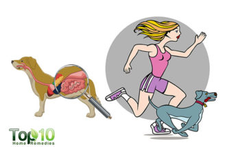 How a Daily Walk Will Improve Your Dog's Health and Behavior
