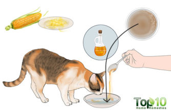 How to Treat Cystitis in Cats