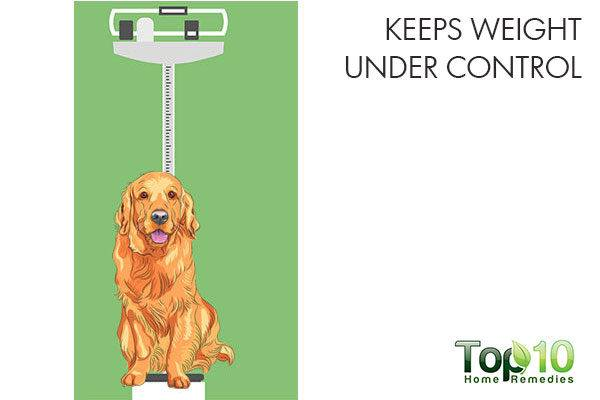 keeps your pet's weight under control